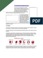 Sistema Cardiovascular y funciones de la cèlula