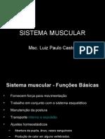 Sistema Muscular 2008