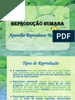REPRODUÇÃO--HUMANA-----Aparelho-Reprodutor-Masculino----Biologia-12º