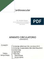 Clase01 Cardiovascular