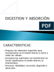 Digestion_Absorcion.ppt