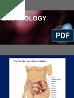 Oogenesis Reproductive Cycle & Fertilization
