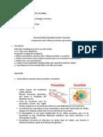 Taller No. 1 Biología Molecular y Celular