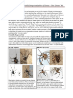 Identification of Potentially Dangerous Spiders of Kansas