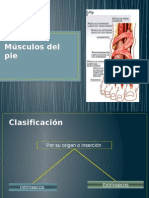 Musc Ulos Del Pie