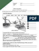 the plant kingdom revision handout
