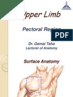Upper limb, Pectoral Region