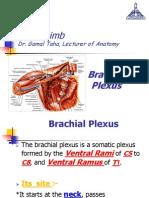 Upper Limb, Brachial Plexus