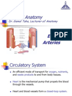 General anatomy, End Arteries
