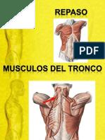 Repaso Musculos Del Tronco