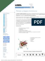 2-)Pompe a Membrana Certificate Atex Per Prodotti Chimici