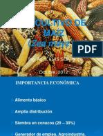 Cultivo Maiz Clase General