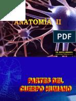 Anatomia II Curso
