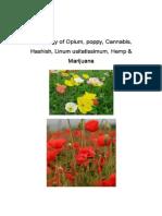 Etymology of Opium, Poppy, Cannabis, Hashish, Linum Usitatissimum, Hemp & Marijuana