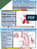 Tema 6 Aparato Respiratorio