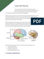 Anatomi Cerebrum