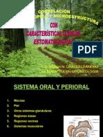 medicina estomatologica correlacion macroscopica y microestructura .ppt