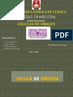 Celulas de Origen