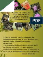 Plante si animale rare din Romania