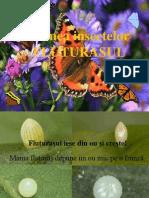 0_fluturasul