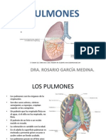 (22) Pulmones