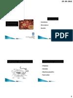 Clase 1 Va Estructura y Morfologia Bacteriana