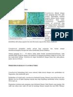 Cyanobacteria 4