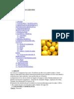 Cultivo.de.Limones