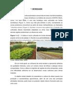 Alface.pdf