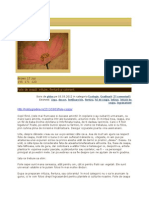 FUNGICIDE -   2.  REMEDII -   1. Foile de ceapă - infuzie, fiertură şi colorant