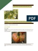 [ 6 ] PEST - 2012 - InSECTI - Gradinariscusit - CRAITE - 2 Craite Pt. 6 Tomate