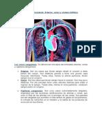 Aparato circulatorio arterias, venas y sistema linfático