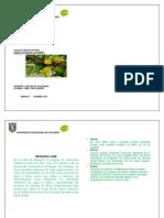 TRABAJO FITOPATOOGIA.docx