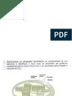 Questionário fotossíntese