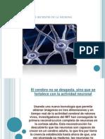 Estudios Recientes de La Neurona