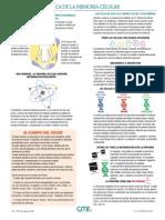 Cmr Guide Spanish