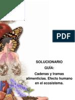 Solucionario Gua BL 27 Cadenas y tramas alimenticias.pdf