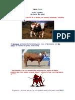 Razas de Vacuno de Carne