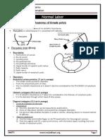 Normal Labor.pdf