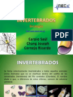 invertebrados-1230499392876400-1