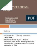 Anatomy Adrenal