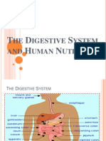 The Digestive System and Human Nutrition Continue
