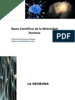Neurona Unidad Basica Del s.n.C