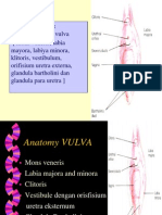 VULVITIS2