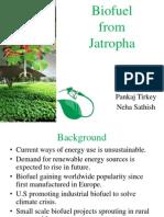 Biofuel From Jatropa