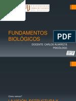 FUNDAMENTOS BIOLÓGICOS vision audicion gusto