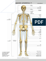 2_Apparato_scheletrico.pdf