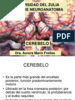 Cerebelo_1