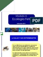 Ecologia Fetal