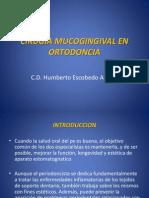Cirugia Mucogingival en Ortodoncia 1206665930417219 4